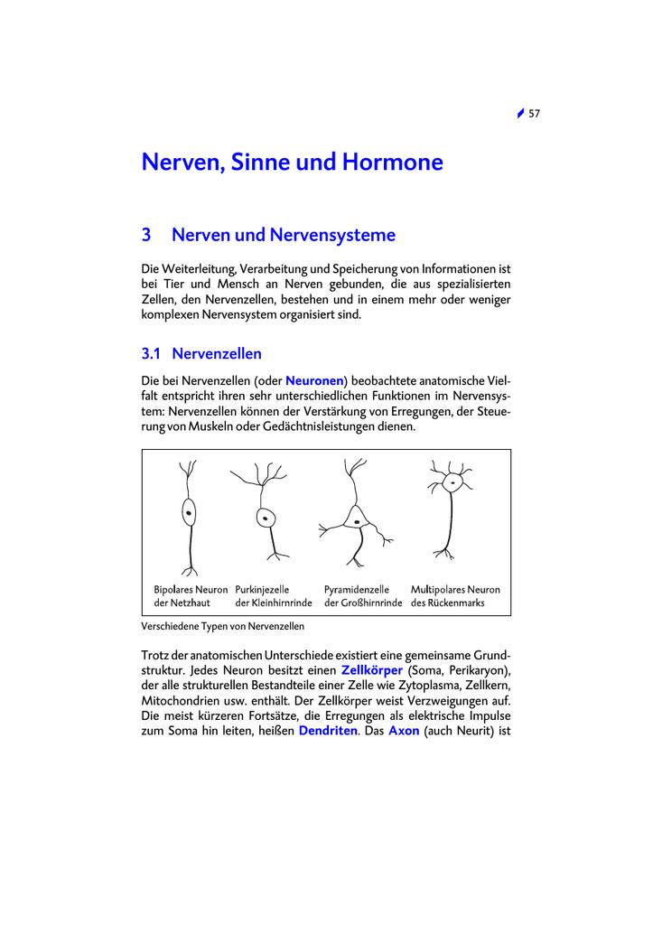 Nerven, Sinne und Hormone