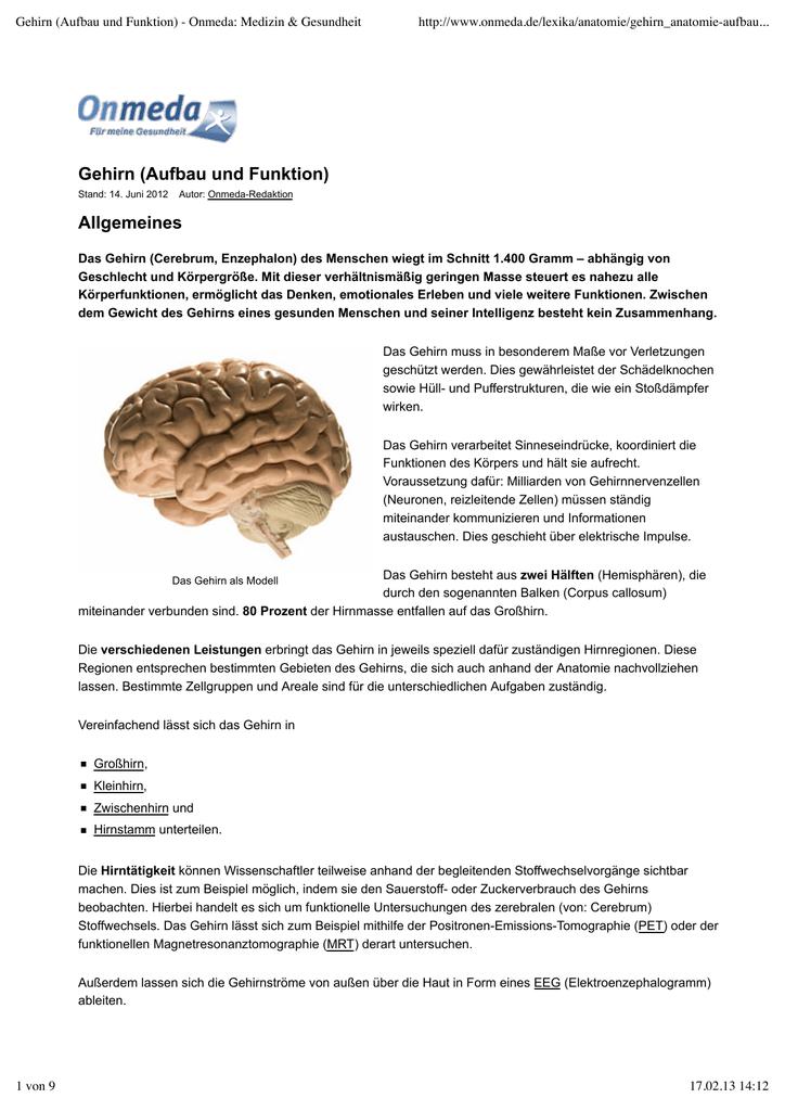 Gehirn (Aufbau und Funktion) - Onmeda: Medizin