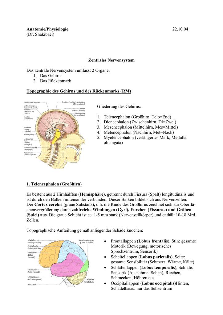 Anatomie/Physiologie 22.10.04 (Dr. Shakibaei) Zentrales