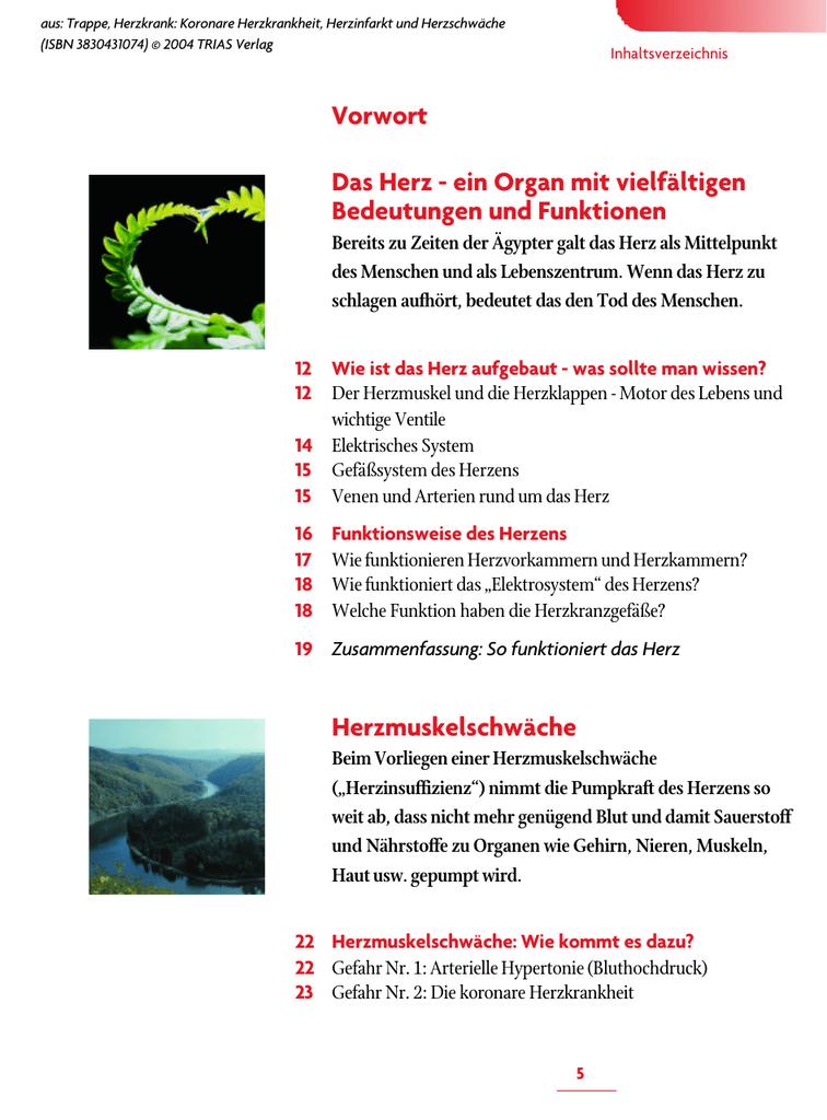 Niedlich Herzanatomie Funktion Zeitgenössisch - Anatomie Ideen ...