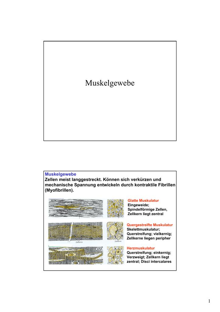 Beste Muskelgewebe Bilder Zeitgenössisch - Anatomie Ideen - finotti.info