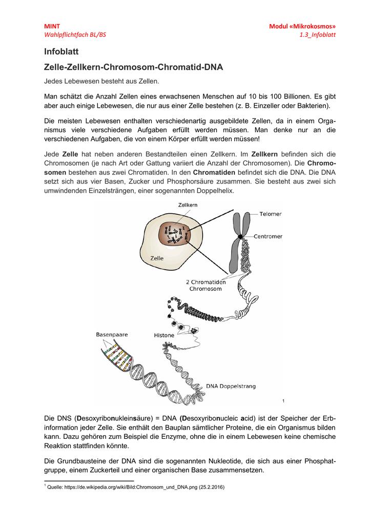 Fantastisch DNA Doppelhelix Arbeitsblatt Ideen - Mathe Arbeitsblatt ...