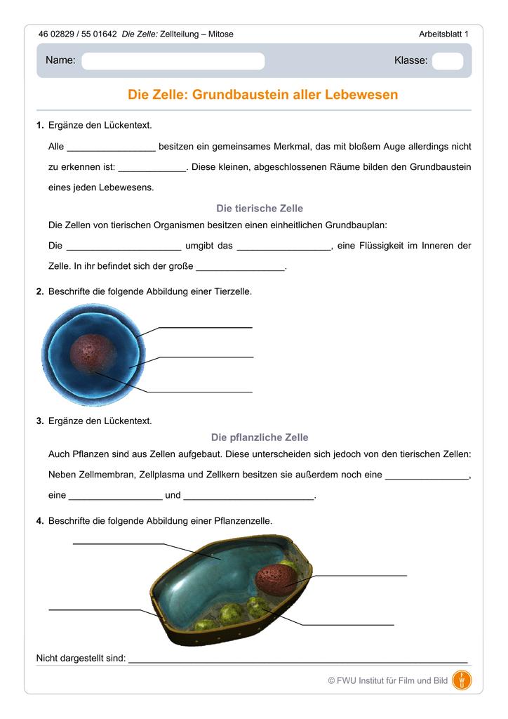 Die Zelle: Grundbaustein aller Lebewesen
