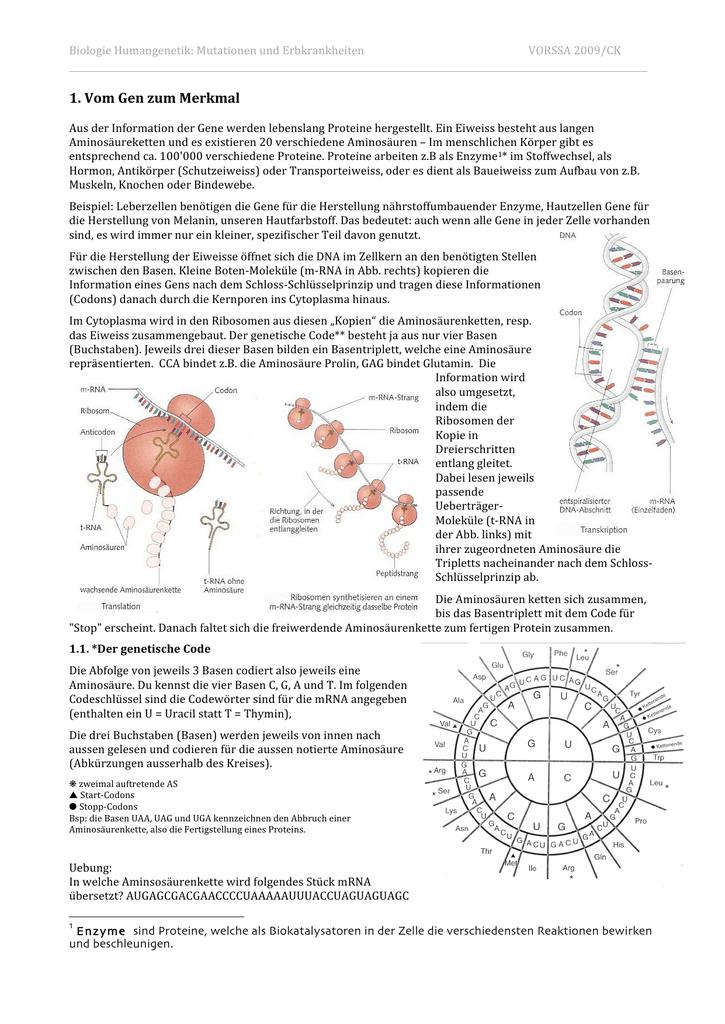 Erfreut DNA Mutationen Zum Arbeitsblatt Zeitgenössisch ...