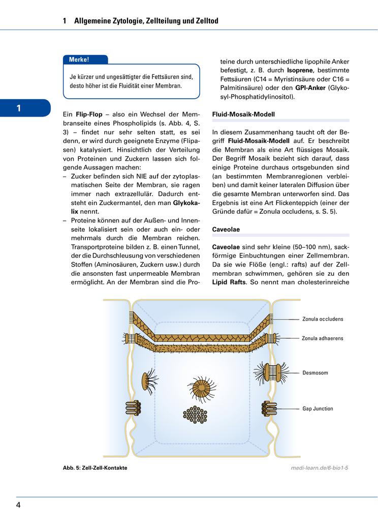 Ziemlich Anatomie Der Zellmembran Fotos - Anatomie Ideen - finotti.info