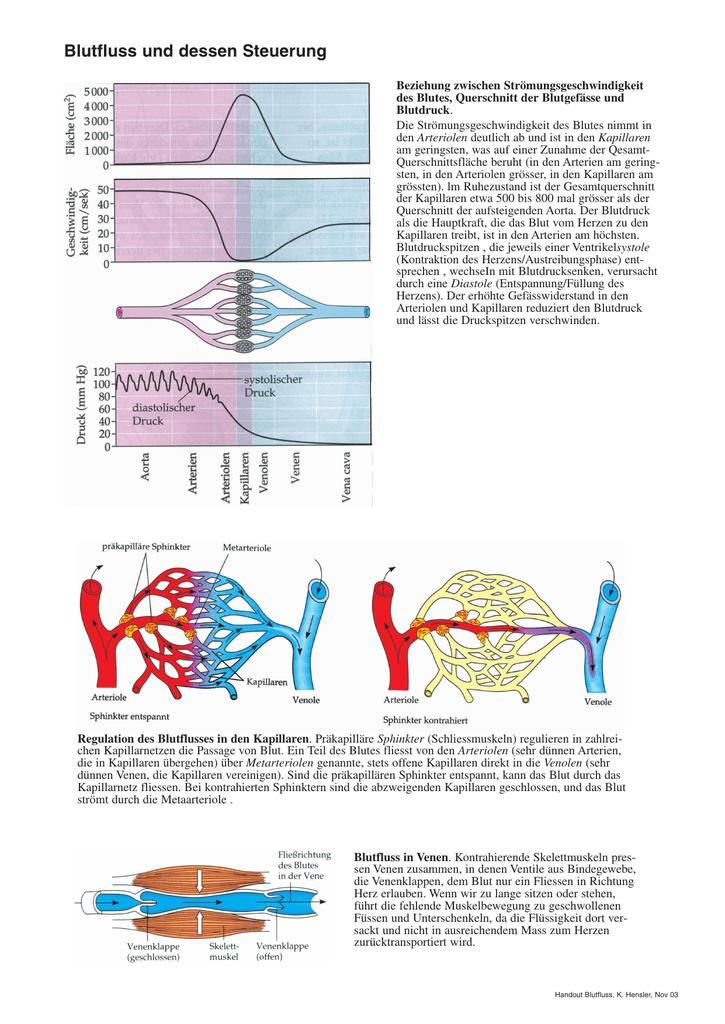 Tolle Diagramm Des Blutflusses Durch Den Körper Fotos - Anatomie und ...
