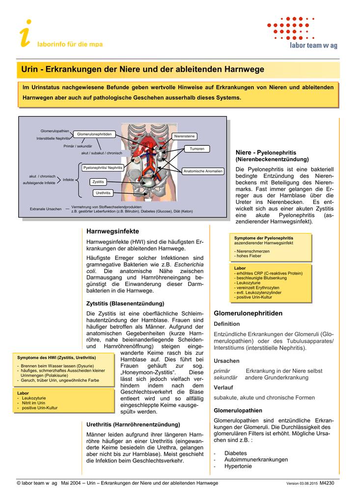 Urin - Erkrankungen der Niere und der ableitenden