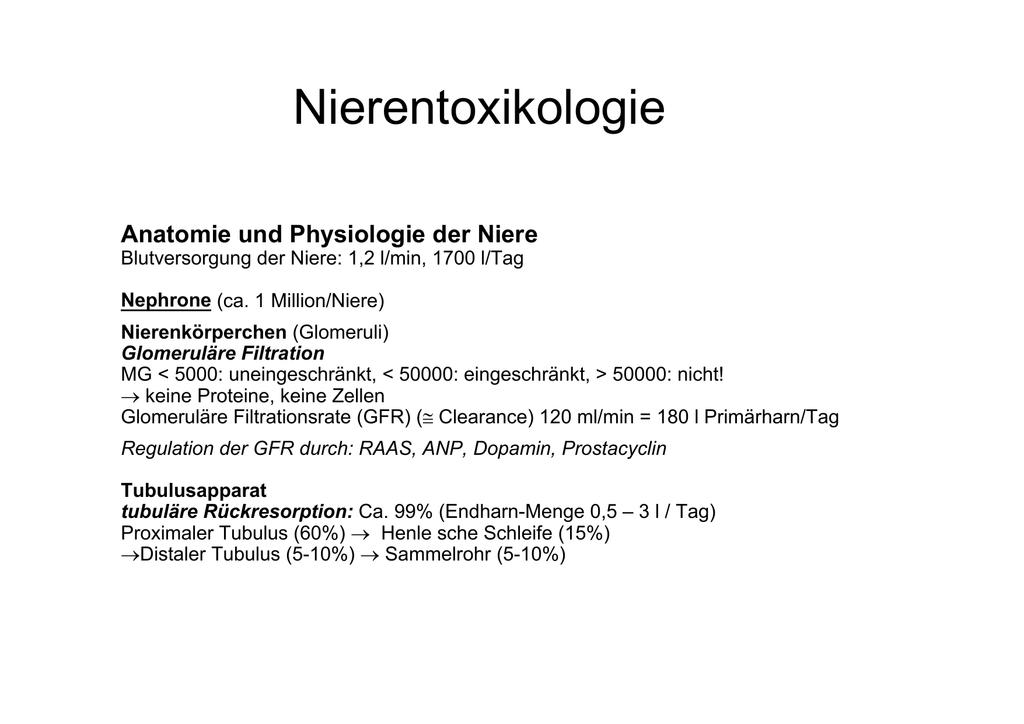 Anatomie und Physiologie der Niere