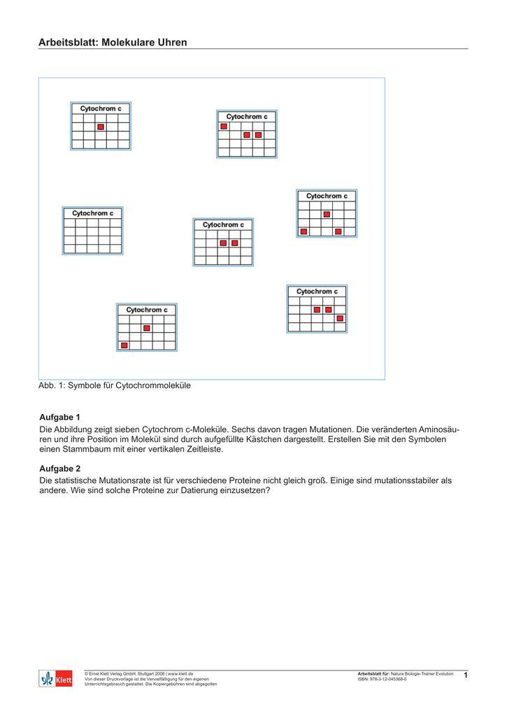 Arbeitsblatt: Molekulare Uhren