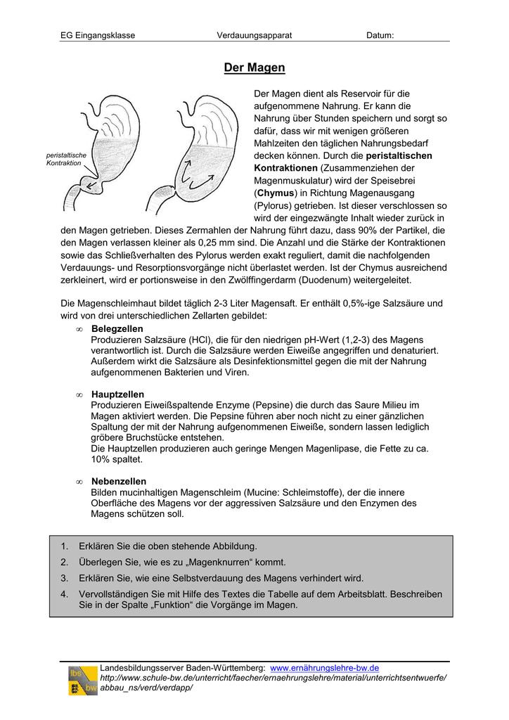 Der Magen - Landesbildungsserver Baden