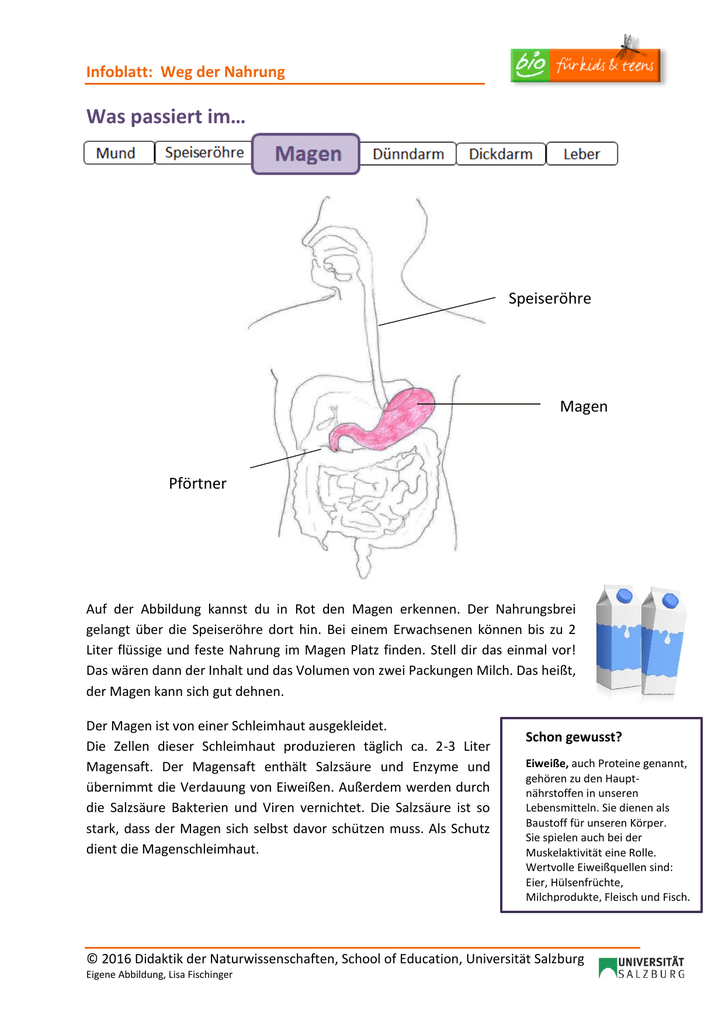 Fein Funktionen Von Salzsäure Im Magen Fotos - Menschliche Anatomie ...