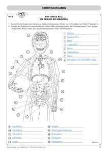 fakten zum skelett das menschliche skelett besteht aus ber 200. Black Bedroom Furniture Sets. Home Design Ideas