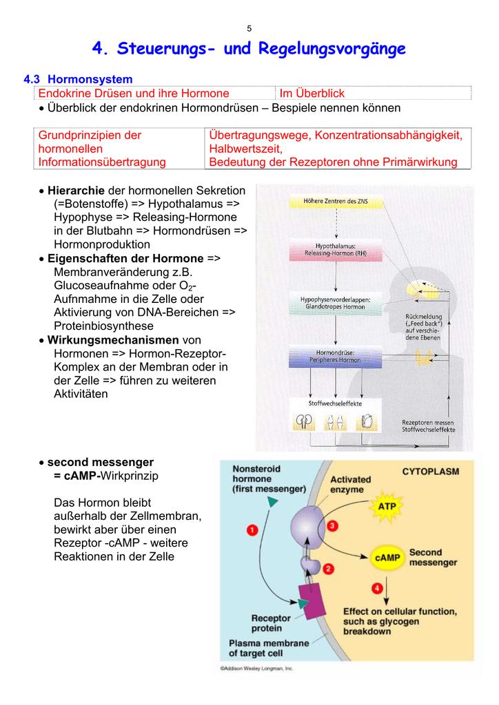 Hormonsystem - der HWS Albstadt