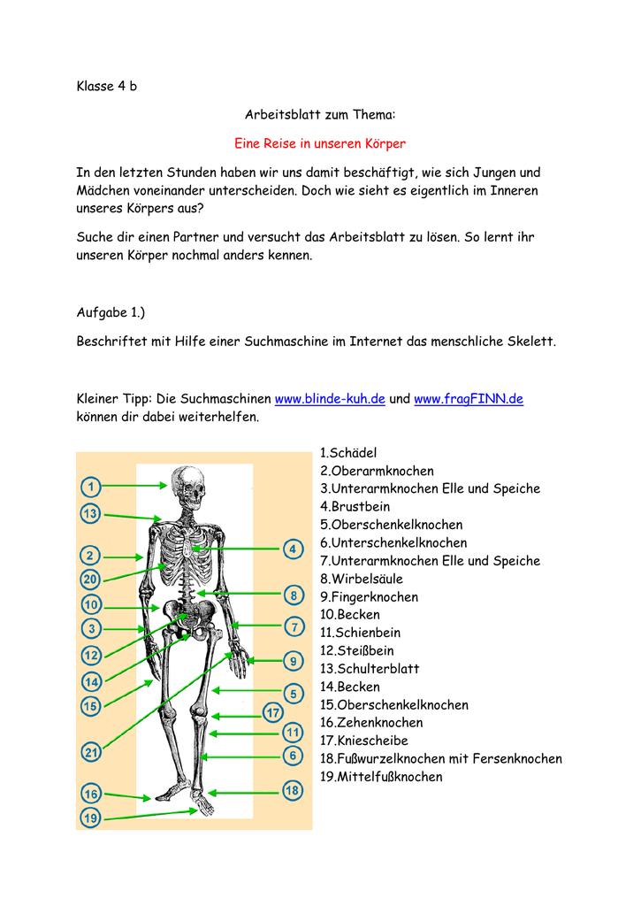 Klasse 4 b Arbeitsblatt zum Thema: Eine Reise in unseren Körper In