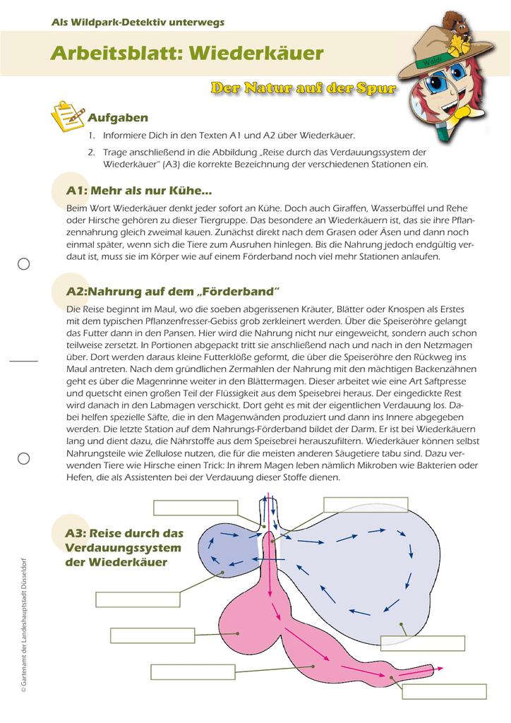 Fantastisch Verdauungssystem Arbeitsblatt High School Zeitgenössisch ...