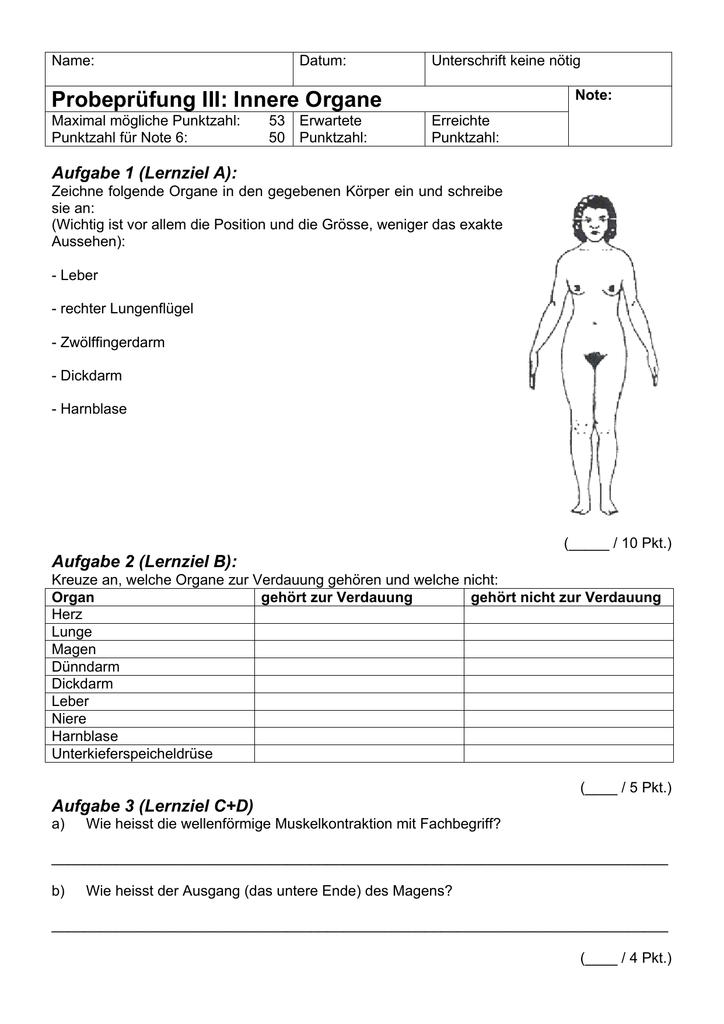 Probeprüfung III: Innere Organe