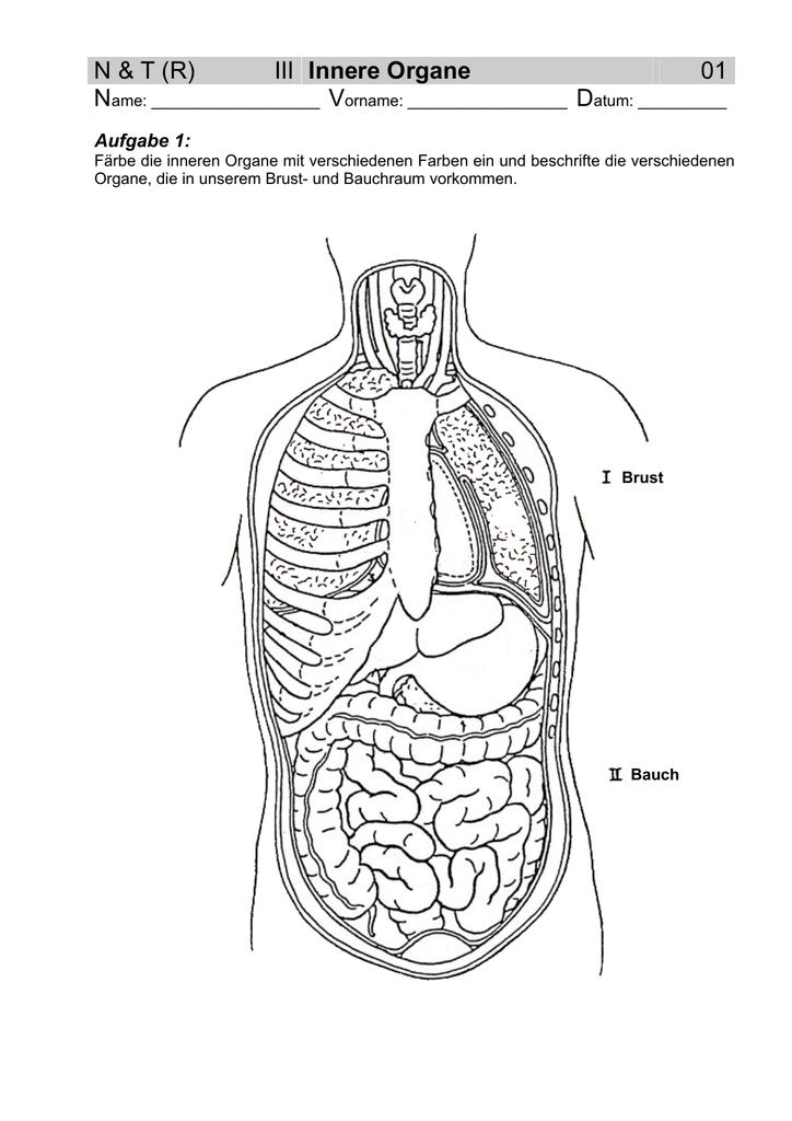 Charmant Bild Der Menschlichen Inneren Organe Zeitgenössisch ...