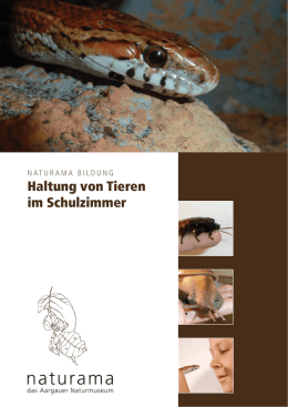 Schulraum Zoo-in Bearbeitung.indd