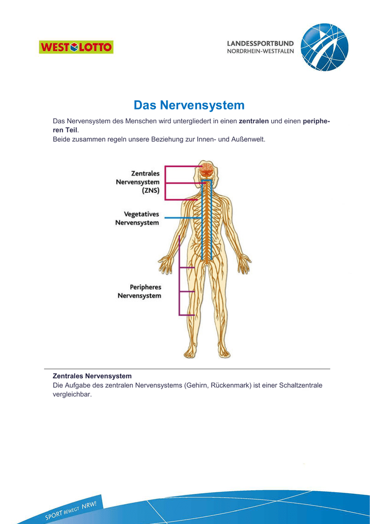 aufgaben zentrales nervensystem