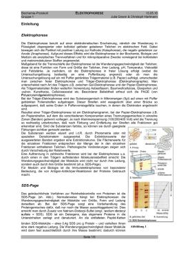 immunelektrophorese im urin
