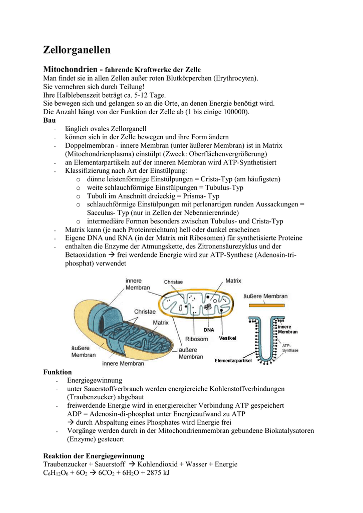 Zellorganellen & Metabolismus