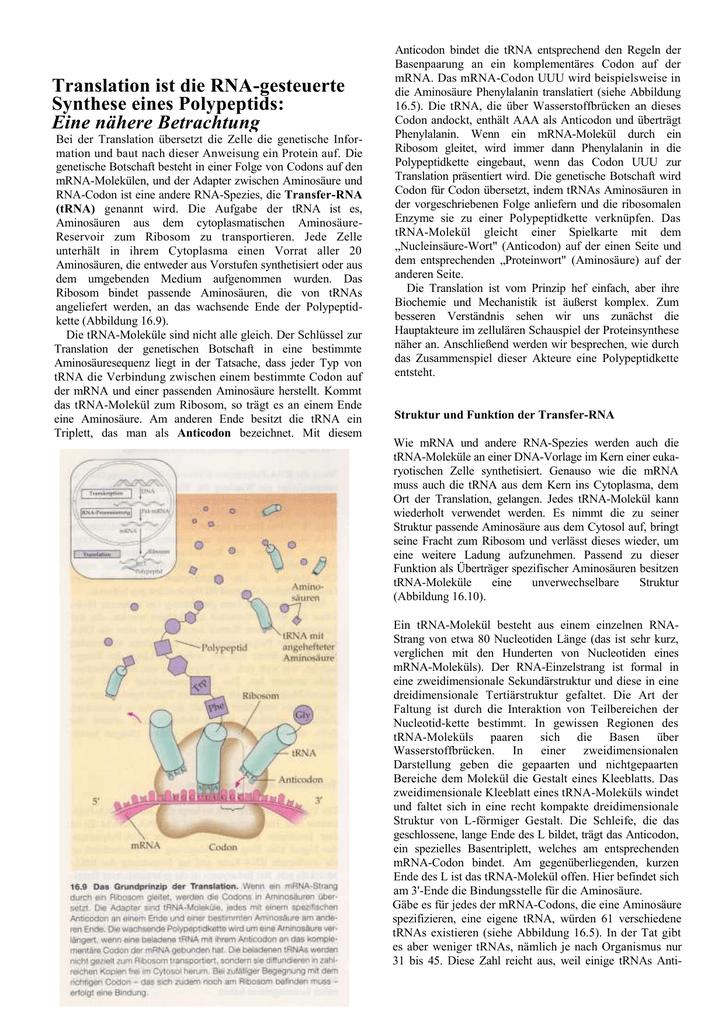 Translation ist die RNA-gesteuerte Synthese eines Polypeptids