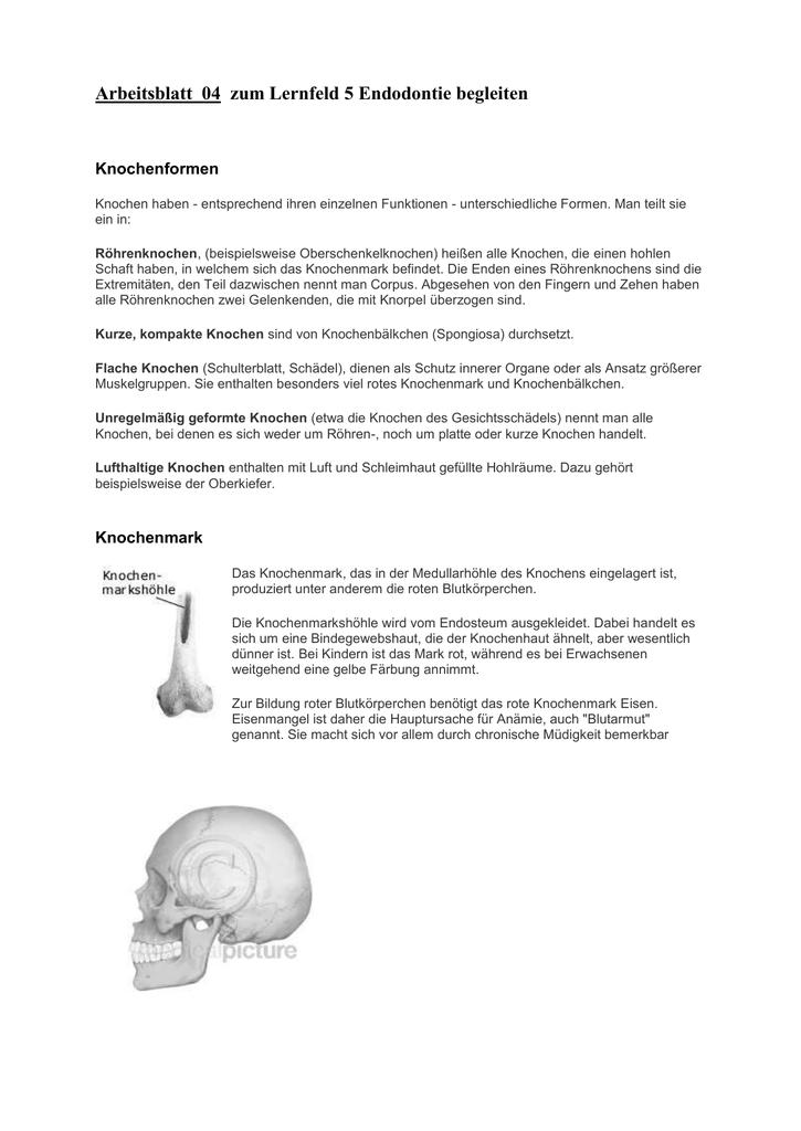 04 Arbeitsblatt Knochenaufbau und Schädel