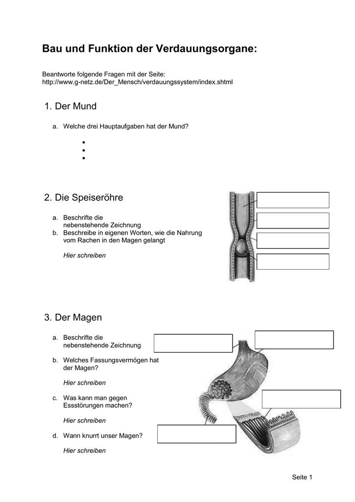 Bau und Funktion der Verdauungsorgane