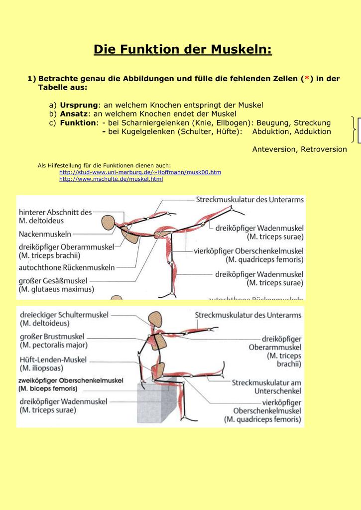 Muskeln kennen und benennen: