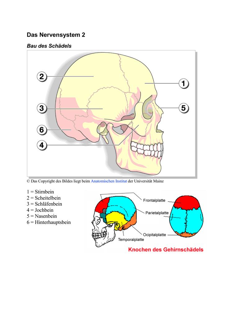 Gemütlich Das Nervensystemdiagramm Galerie - Menschliche Anatomie ...