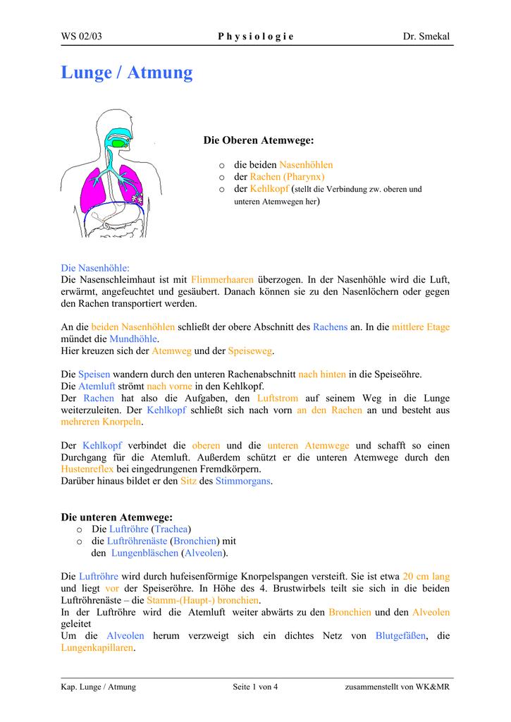 17d712532e WS 02/03 Physiologie Dr. Smekal Lunge / Atmung Die Oberen Atemwege: o die  beiden Nasenhöhlen o der Rachen (Pharynx) o der Kehlkopf (stellt die  Verbindung ...