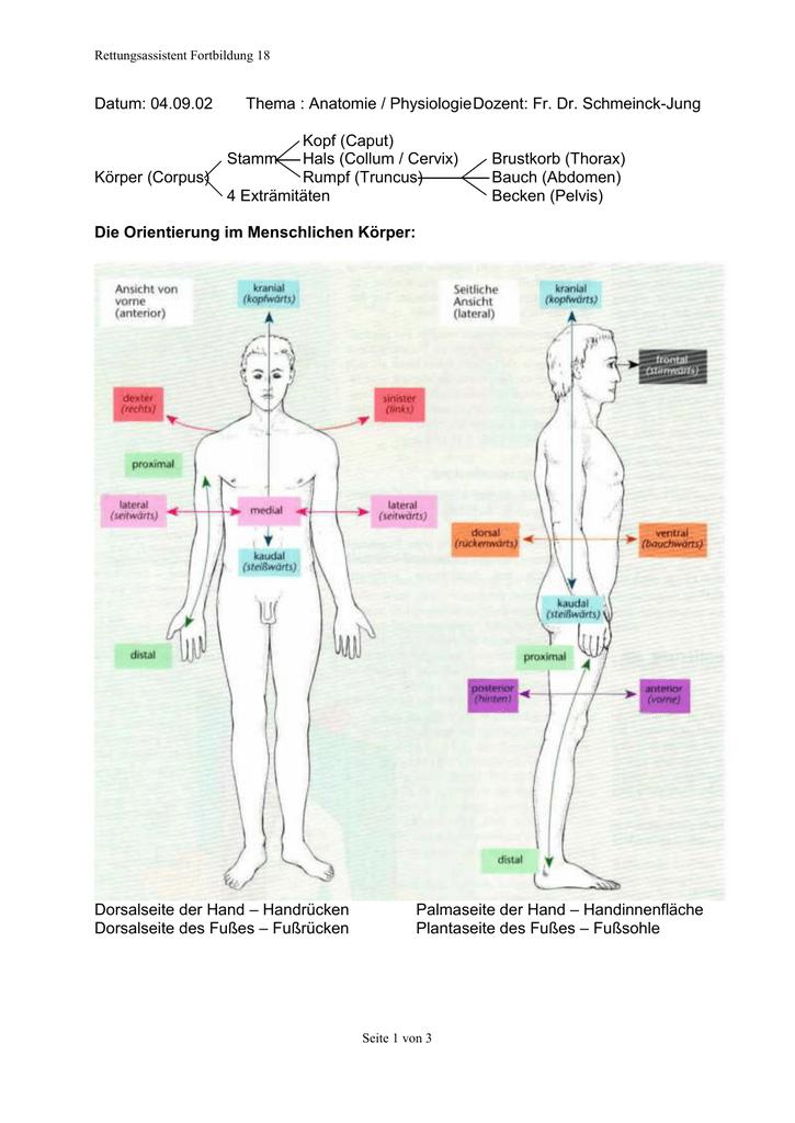 Anatomie / Physiologie Dozent: Fr. Dr. Schmeinck-Jung