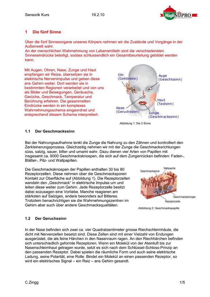 Charmant 4 Arten Von Geschmacksknospen Bilder - Menschliche Anatomie ...
