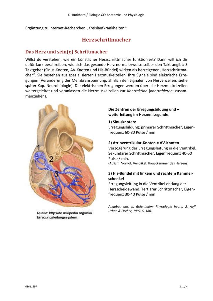 Wunderbar Herz Anatomie Und Physiologie Wikipedia Bilder ...