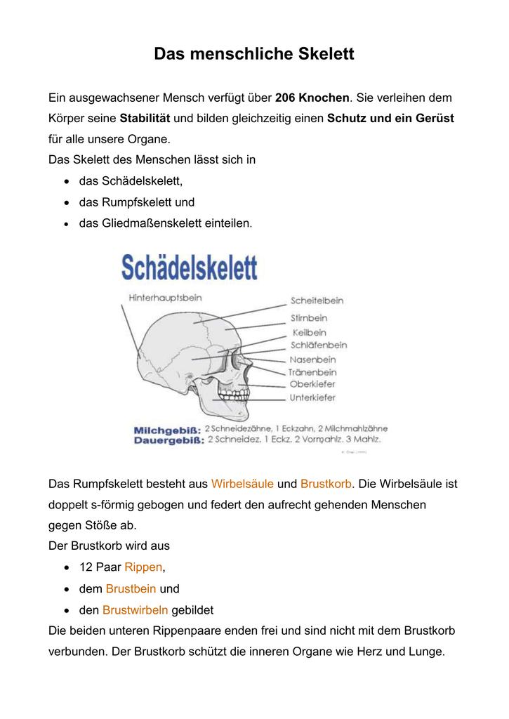 Großartig Untere Knochen Des Brustbeins Zeitgenössisch - Menschliche ...