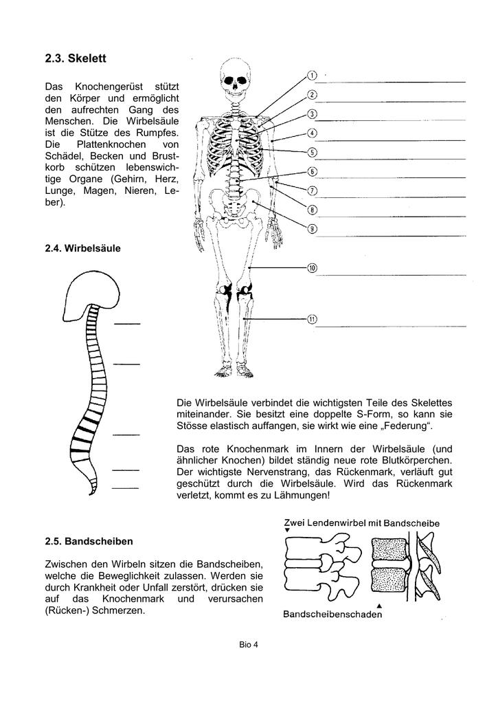 4-Skelett