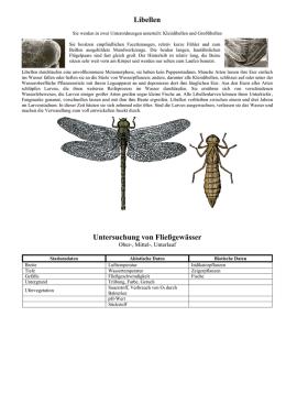 königs libelle steckbrief