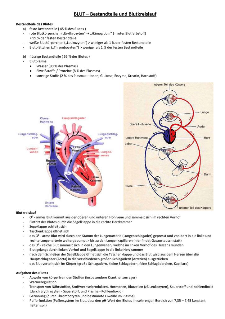 BLUT – Bestandteile und Blutkreislauf Bestandteile des Blutes a