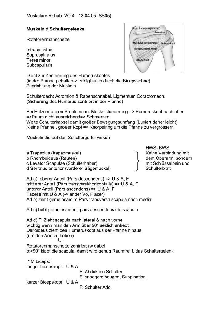 Muskuläre Rehab. VO 4 - 13.04.05 (SS05) Muskeln d