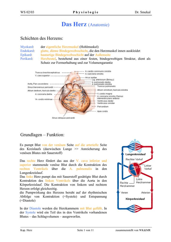 Ungewöhnlich Anatomie Des Rechten Ventrikels Bilder - Anatomie Ideen ...