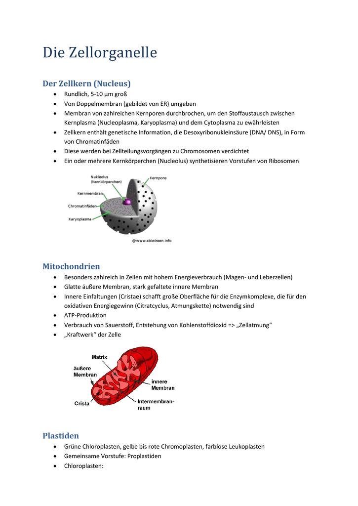 Kernplasma Funktion