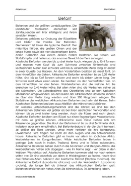 Der Elefant - Differenzierung