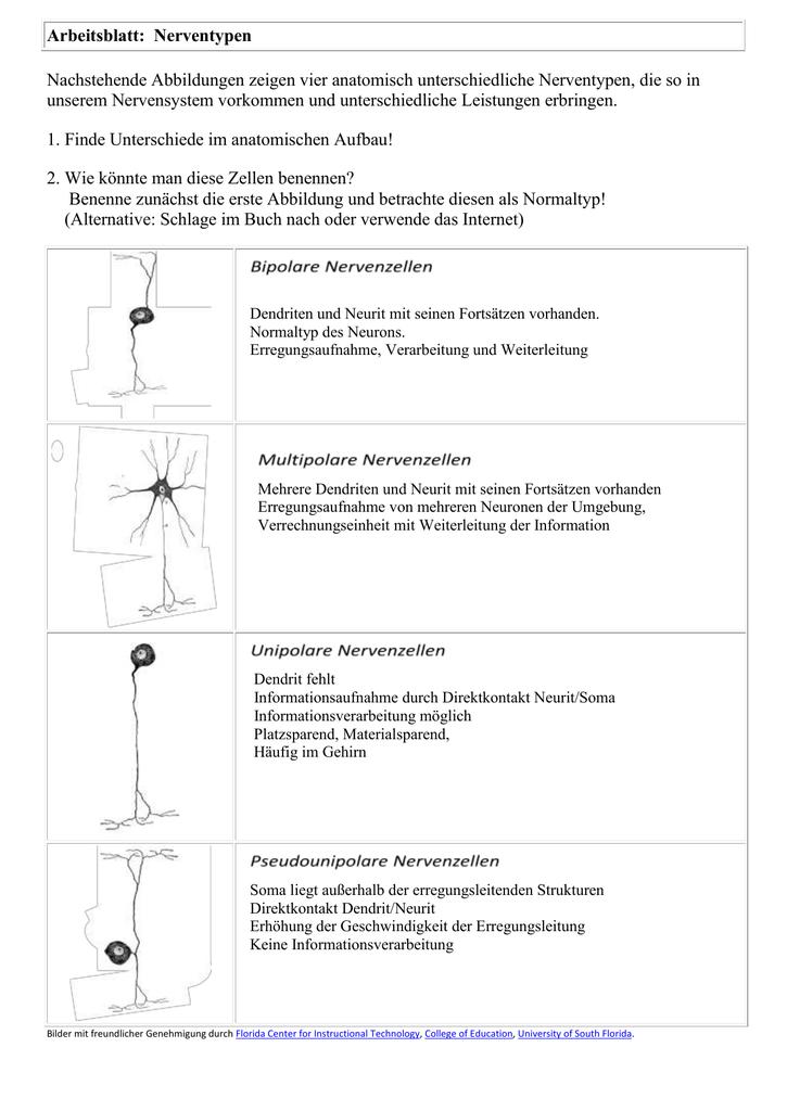 Ungewöhnlich Crashkurs Anatomie Und Physiologie Arbeitsblatt ...