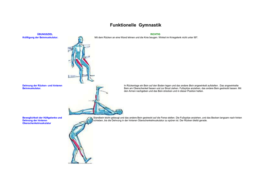 Großzügig Hintere Beinmuskulatur Bilder - Menschliche Anatomie ...