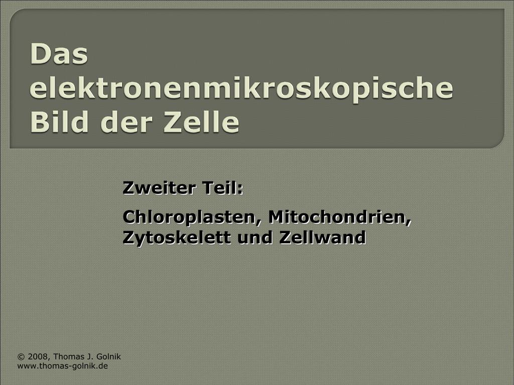 Das EM-Bild der Zelle: Chloroplasten, Mitochondrien, Zytoskelett