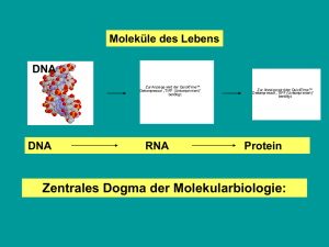 DNA RNA Protein