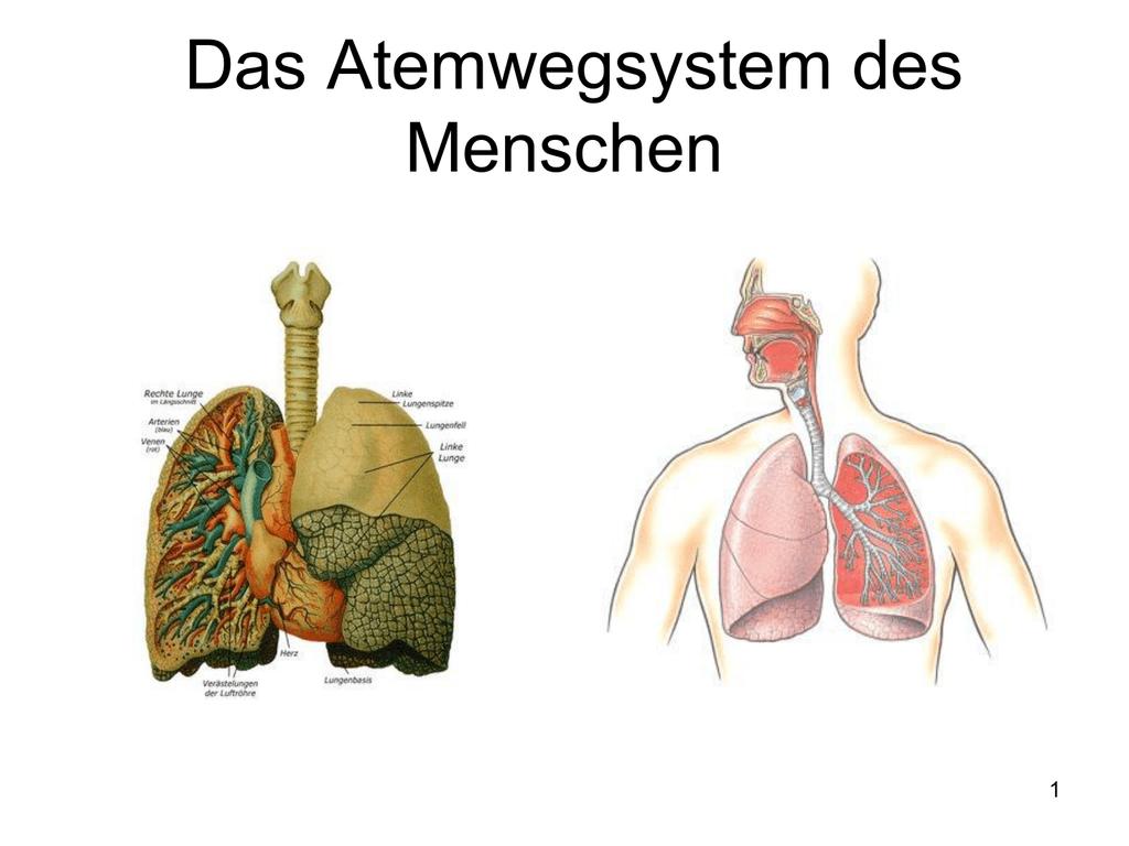 Nett Lymphbahnen Fotos - Menschliche Anatomie Bilder - madeinkibera.com