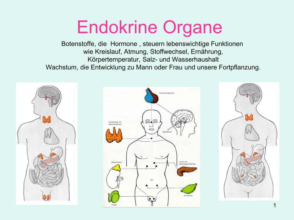 UBV 07_Kapitel 2.h - Das vegetative und endokrine