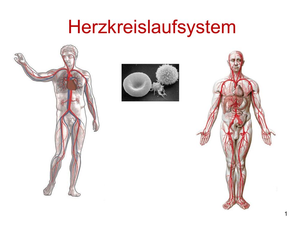 03_Kapitel 2.e - Herz- Kreislaufsystem
