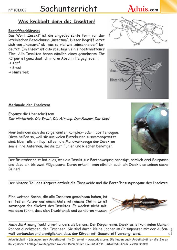 Ungewöhnlich Arbeitsblatt Auf Insekten Fotos - Super Lehrer ...